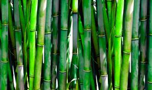 Bamboo Raw